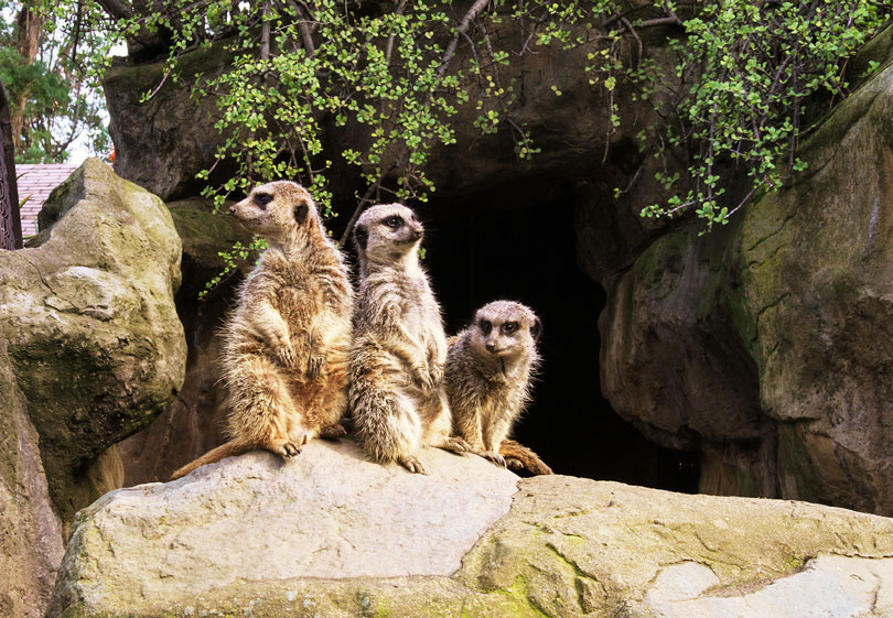 As each slider bar is manipulated, the view transitions from visible light to infrared light. In visible light: Meerkats perch on a rock. In infrared light: The meerkats' surroundings also give off some infrared light, but the meerkats' high temperatures make them glow brightly.